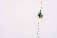 Young Plant Growth On The Crack Wall
