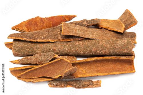 Cinnamomum camphora or Cinnamon bark Fototapeta