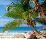 Palms Leaves Trees