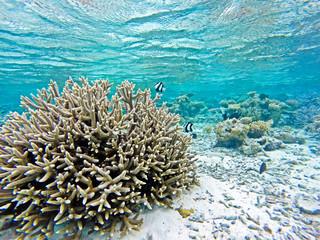Naklejka na ściany i meble Korallenriff mit Fischen