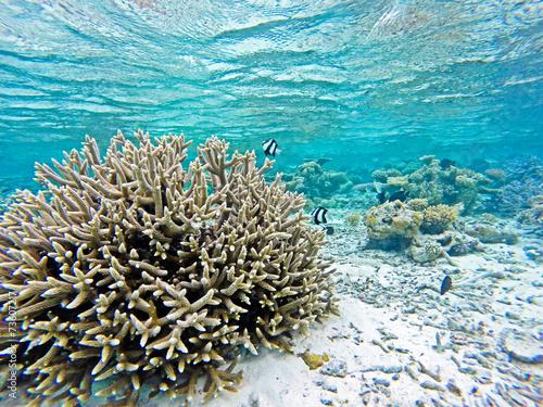 Keuken foto achterwand Onder water Korallenriff mit Fischen