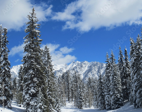 Fototapeta Winter Scene - Rocky Mountains obraz na płótnie