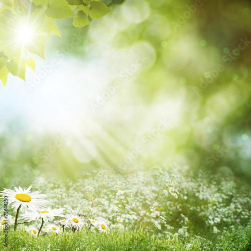 Staande foto Paardebloemen en water Summer day on the meadow, environmental backgrounds with daisy f