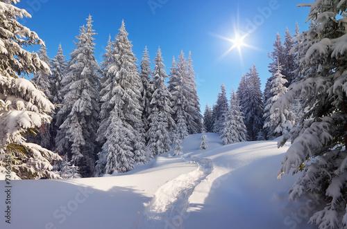 Foto-Leinwand ohne Rahmen - Path in winter forest (von Oleksandr Kotenko)