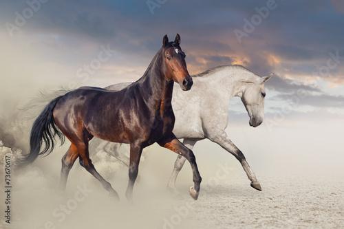 grupa-dwoch-koni-biegajacych-na-pustyni-przed-pieknym-niebem