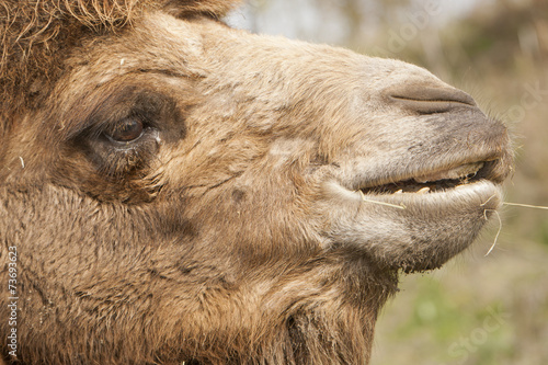 Foto auf Gartenposter Kameel Portret van een kameel.