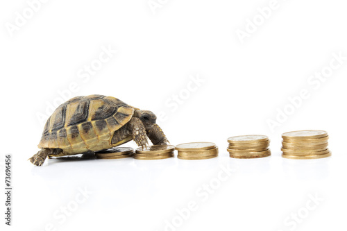 Poster Tortue Money on turtle