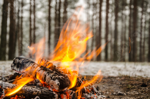 fototapeta na lodówkę Pożar w lesie zimą