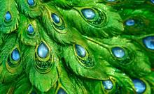 Photos Emerald Peacock Sculpture Classes.