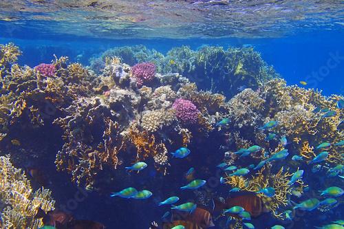 Staande foto Koraalriffen amazing red sea