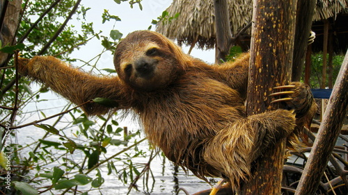 Photo Happy baby sloth