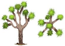 A Yucca Brevifolia