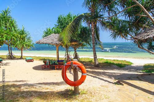 Fotobehang Fiets palm tree on the ocean beach