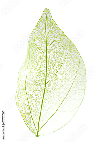 Tuinposter Decoratief nervenblad Decorative skeleton leaf isolated on white