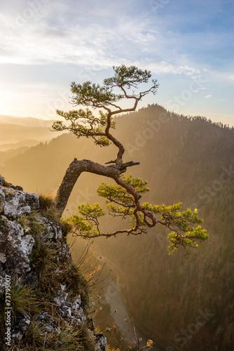 drzewko-bon-sai-na-stromym-stoku-gory