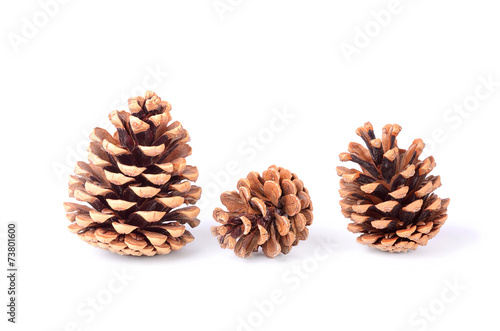 Fotografie, Obraz  Pine cones isolated on white background