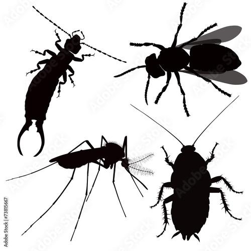 Fotografie, Obraz  dangerous insect silhouette