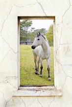 Grey Horse Through A Window