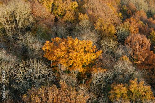 La forêt en automne vue du ciel