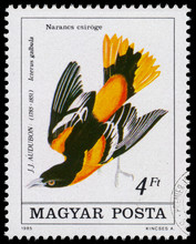 Stamp Printed In Hungary Shows Baltimore Oriole