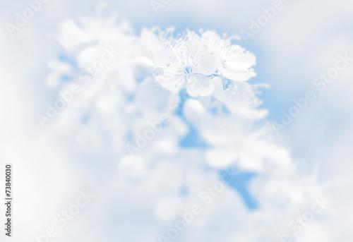 Foto op Canvas Hydrangea White flowers