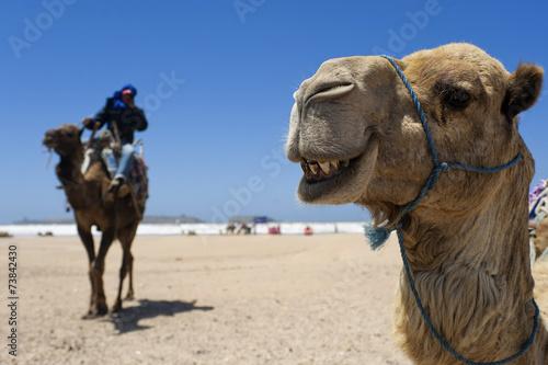 Kamel am Strand von Essaouira, Marokko