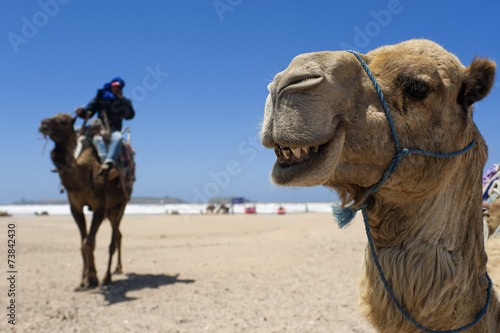 Spoed Fotobehang Kameel Kamel am Strand von Essaouira, Marokko