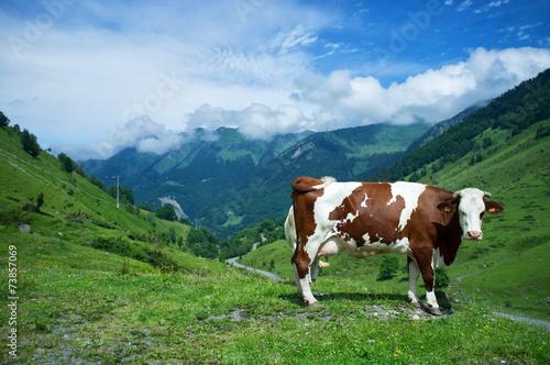 Poster de jardin Vache Vache de Montagne