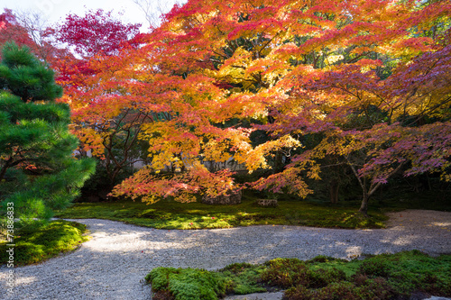 日本庭園 紅葉