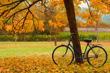 Vintage Bicycle Leaning Against A Tree And Autumn Leaves