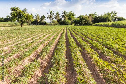Autocollant pour porte Culture landscape cassava