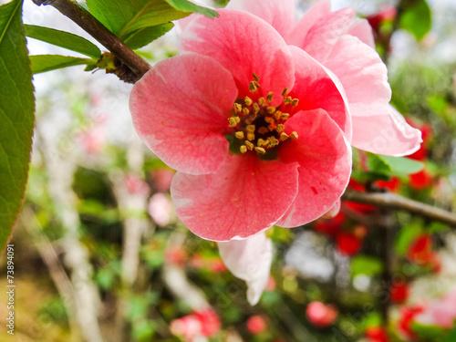 Spring Flowers Japan Kaufen Sie Dieses Foto Und Finden Sie