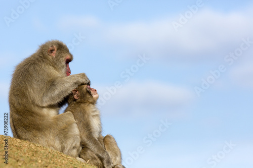 In de dag Aap 猿の親子