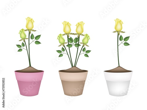 Yellow Roses In Three Ceramic Flower Pots Buy This Stock Vector