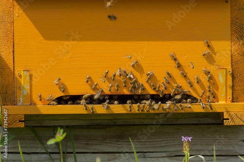 Fototapety, obrazy: Hives with bees