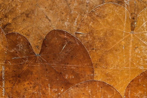 background from dried old leaves of rusty color