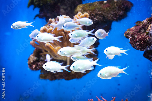 Fotografie, Obraz  School of fish in the Oceanographic Museum in Monaco