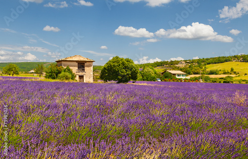 Tuinposter Lavendel Provence. France.