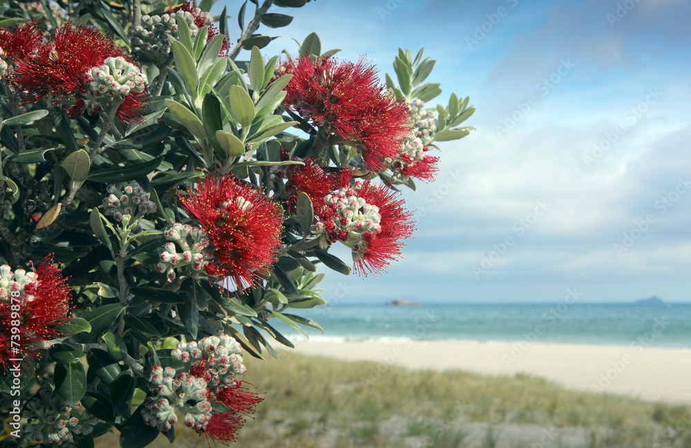 Pohutukawa trees red fowers sandy beach