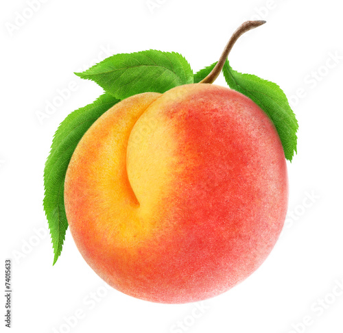 Isolated peach. Fresh peach fruit on a branch isolated on white, with clipping path