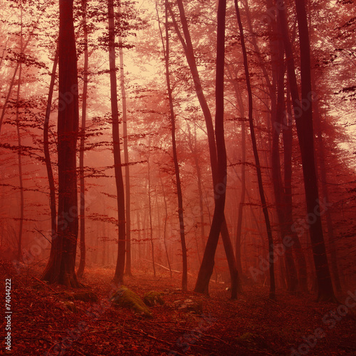 red-colored-forest