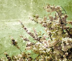 Obraz grunge cherry flowers