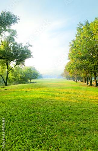 Fotografía beautiful morning light in public park with green grass field an