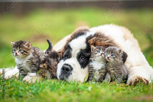 Saint bernard puppy with three little kittens Canvas-taulu