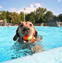 A Dog Having Fun At A Local Pool