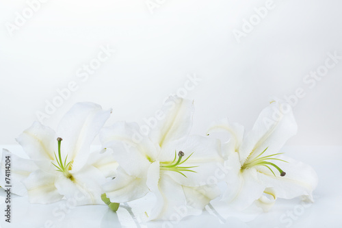 Cadres-photo bureau Nénuphars Beautiful lily isolated on white