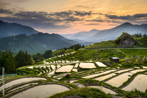 Fotobehang Rijstvelden Rice Paddies in Kumano, Japan
