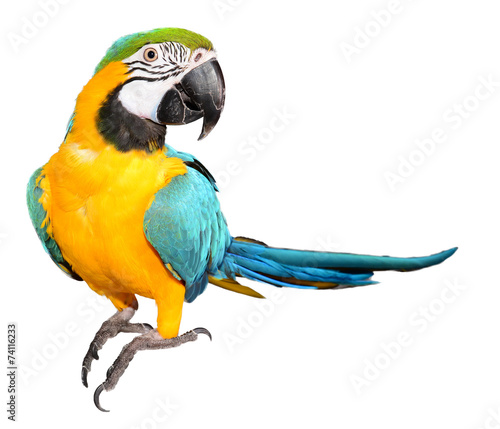 Foto op Canvas Papegaai Blue and Gold Macaw