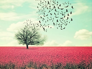Fototapeta Drzewa a pretty lanscape with a pink field and a tree with birds flying