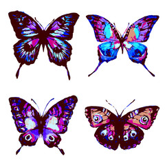 butterfly287